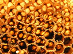 Friss tiszta méhpempő